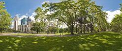 Carlton Gardens Trees
