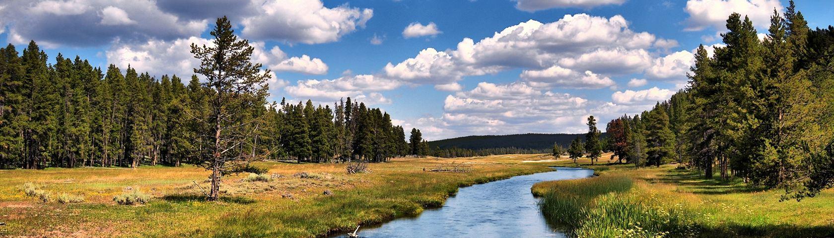 Riverside Forests
