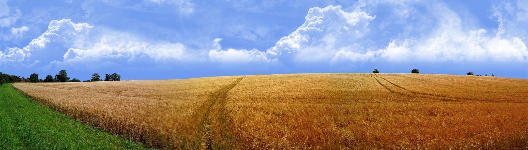 Endless Golden Field