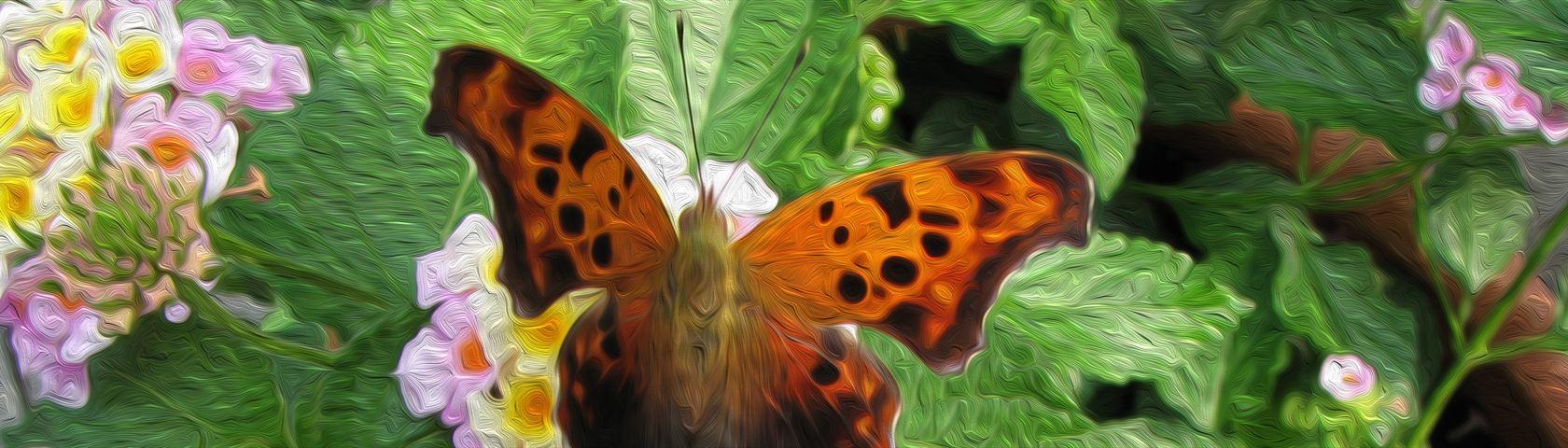 Butterfly (Oil)