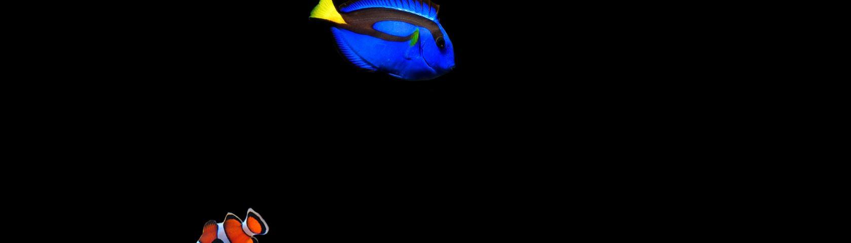 Salt Water Fish 1