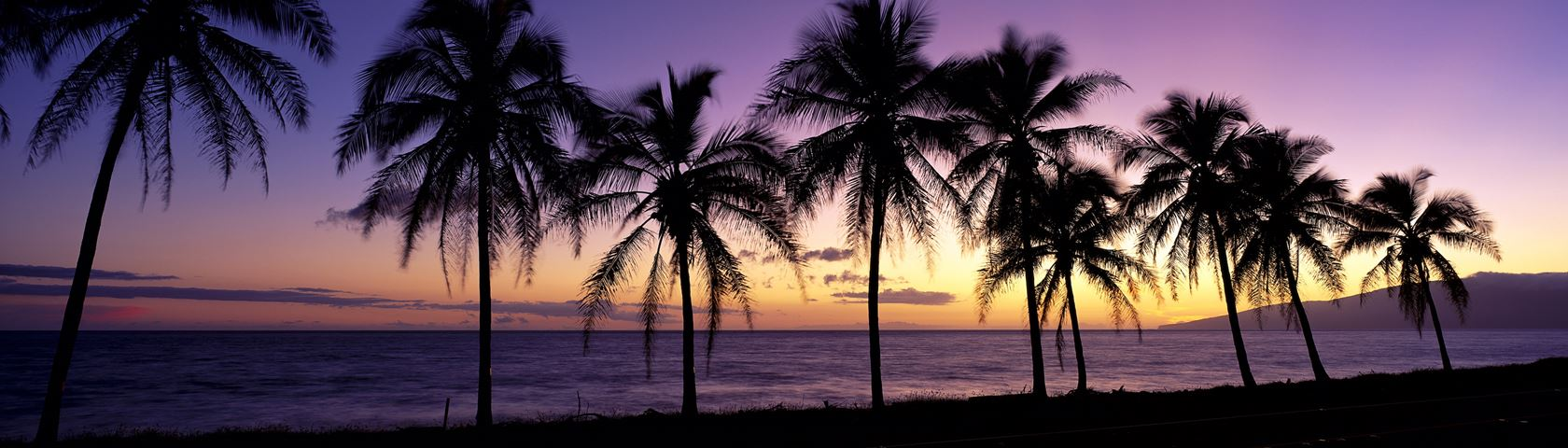 Photo Collection Palm Tree Header Twitter