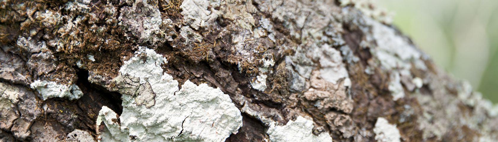 Growth on Tree Bark