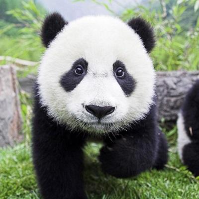 Panda binary options