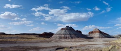Petrified Forest State Park