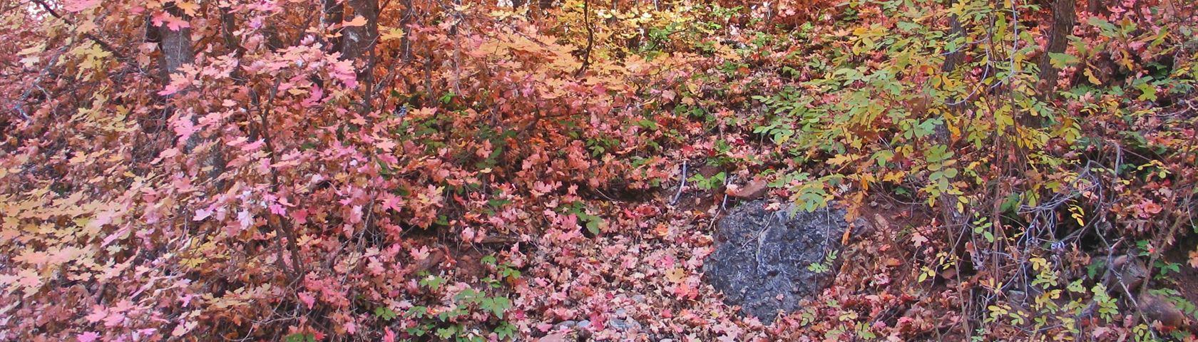 Jungle of Leaves