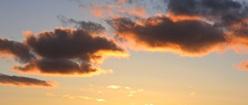 Specimen Sunset