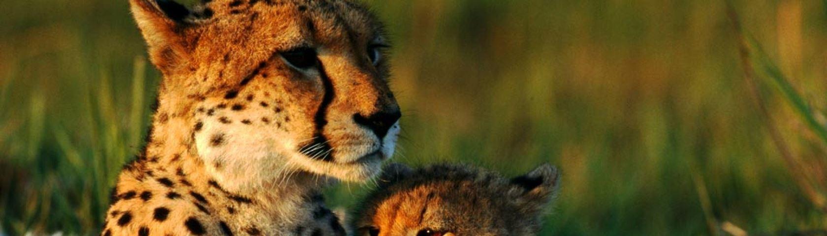 Mom and Baby Cheetah Pyramid