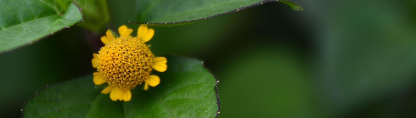 Married Flower