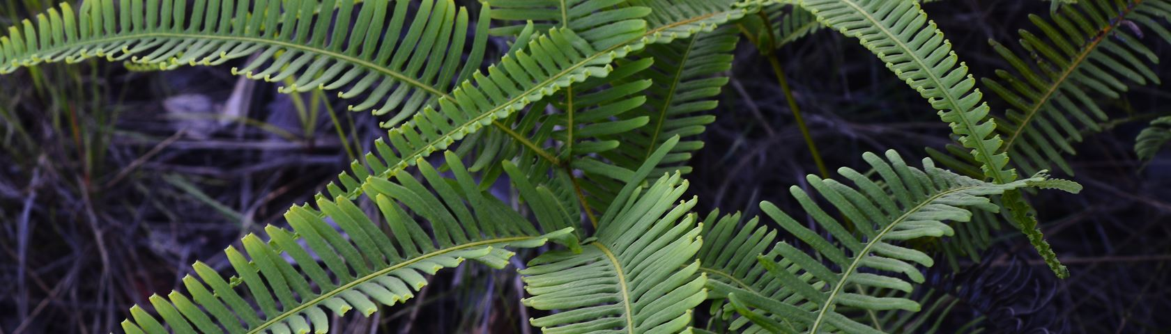 Forest Leaf