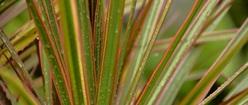 Rain Soaked Plants
