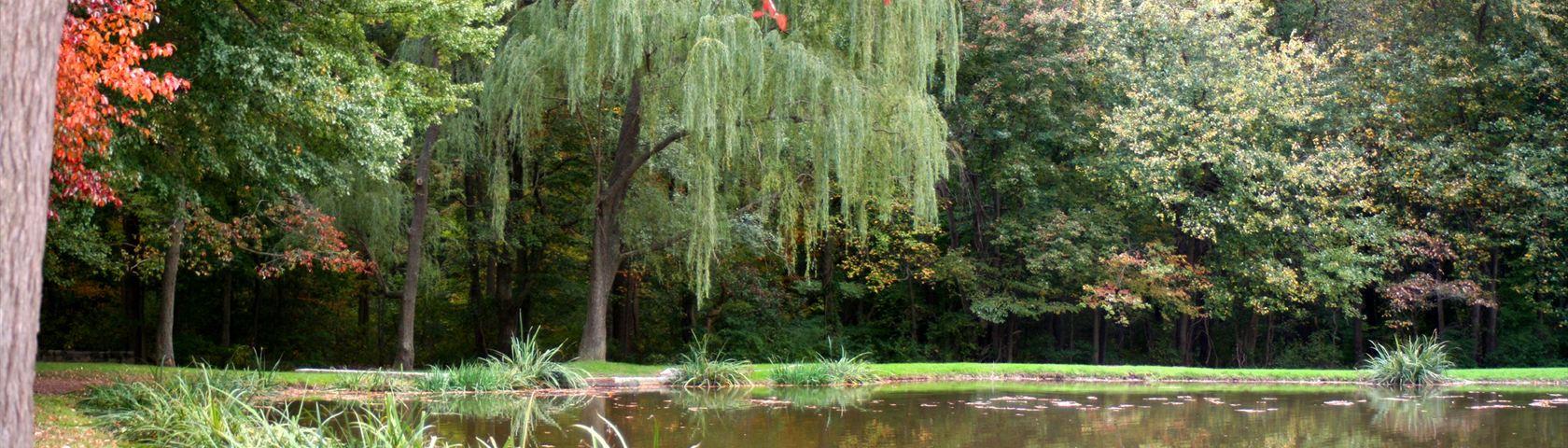 Princeton Pond