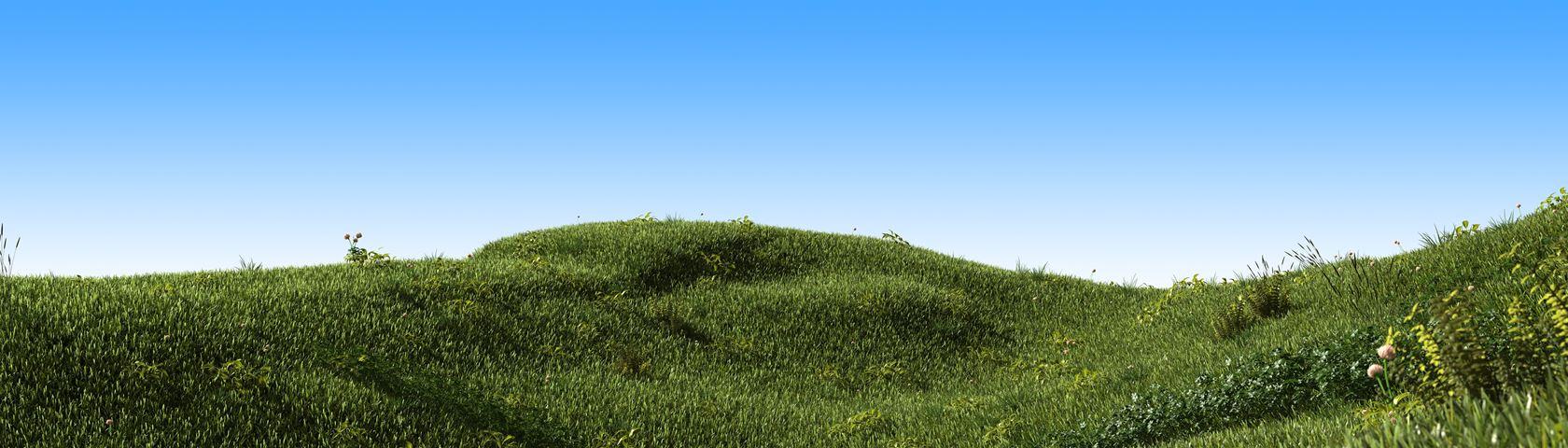 Grass field blue sky
