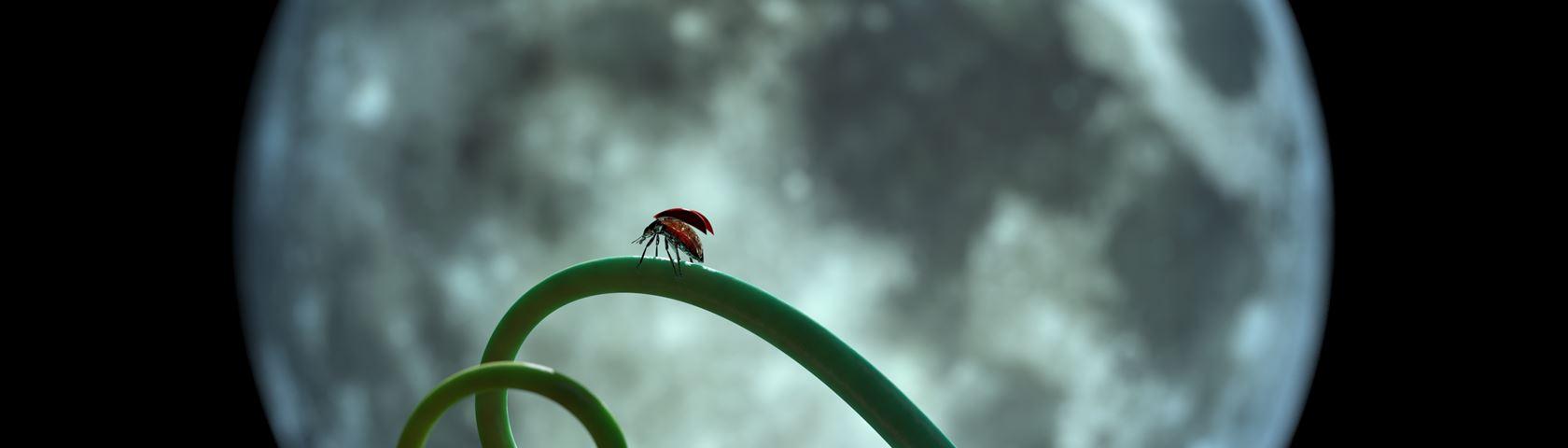 Ladybug - DoF