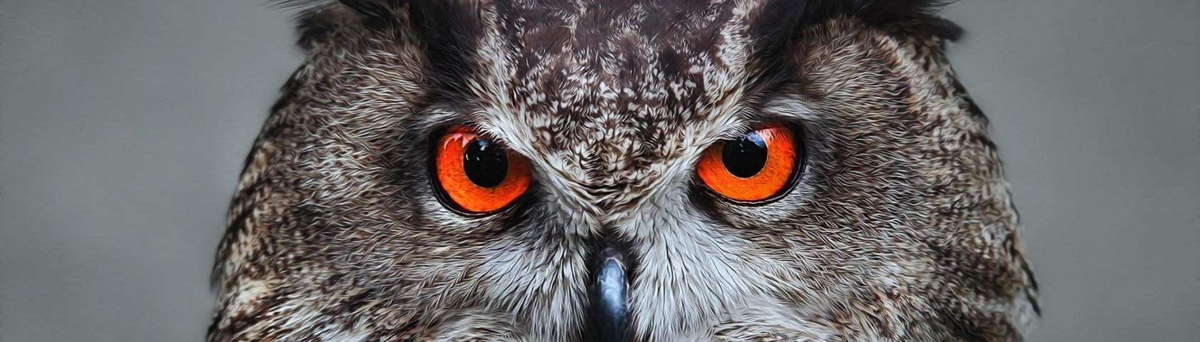 Orange Eyed Owl