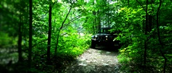 Jeep Rubicon on Forest Path