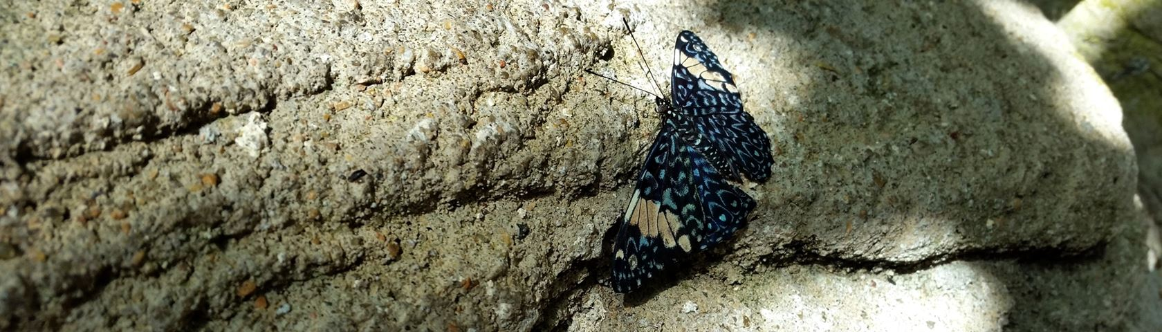 Butterfly on a Rock Wall