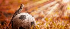 Soccer Lizard