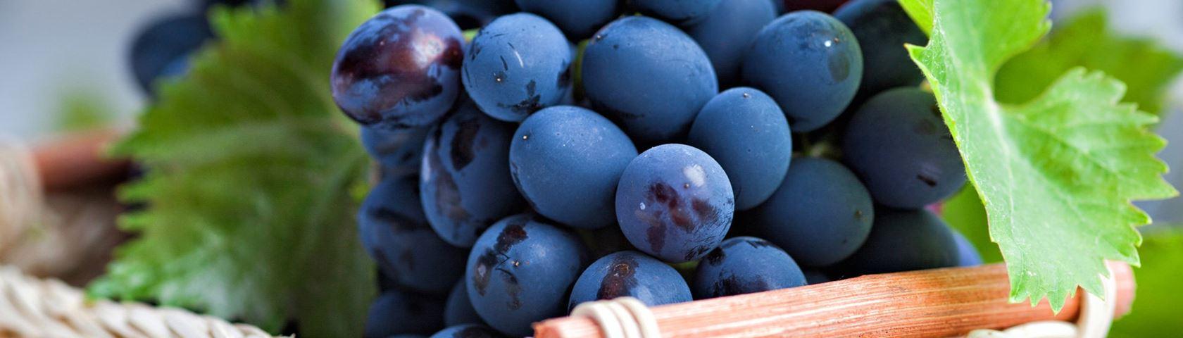 Plump Juicy Grapes
