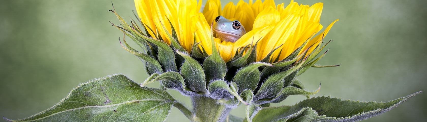 Peek-A-Boo Froggy