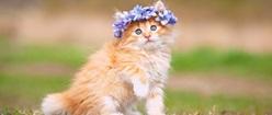 Little Princess Kitty