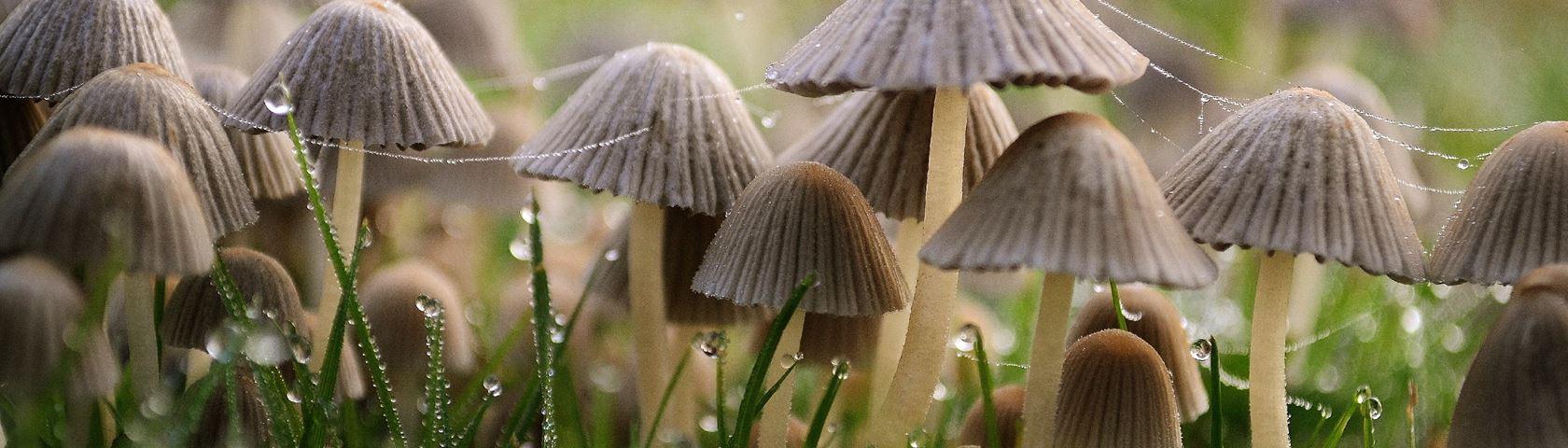 Wild Forest Fungi