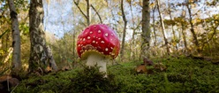 Giant Toadstool