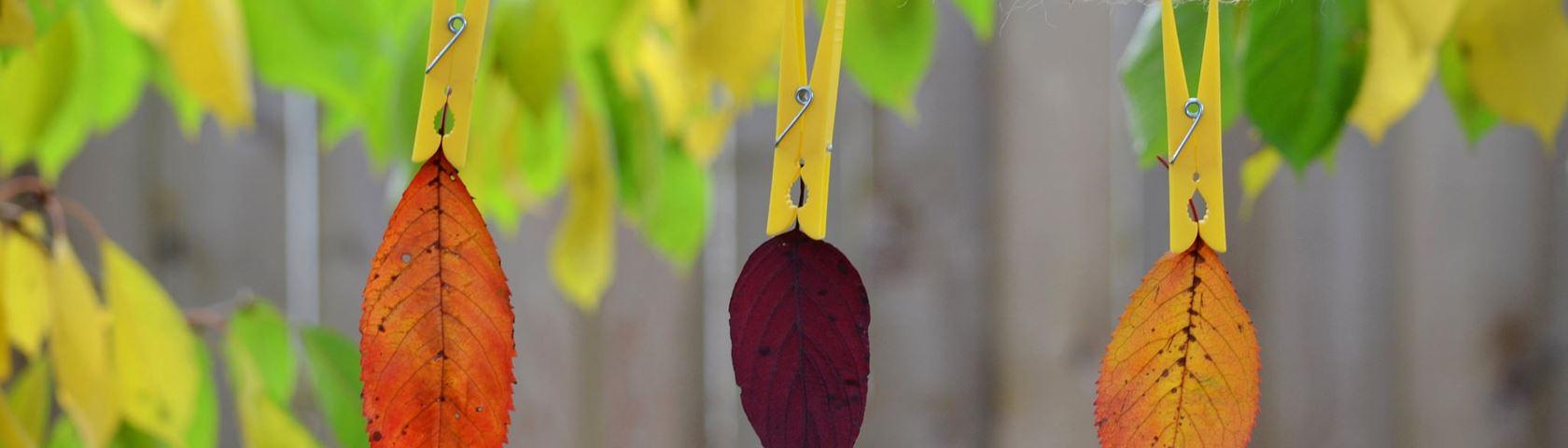 Autumn Pins