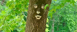 Happy Face Tree