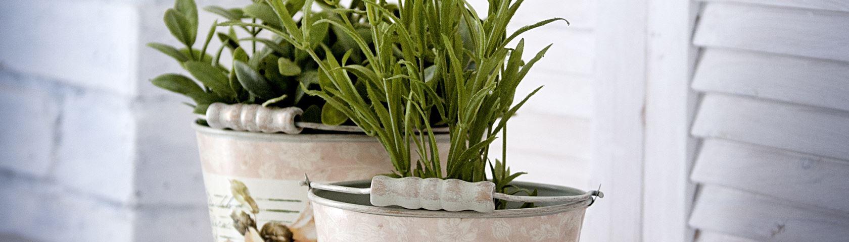 Buckets of Lavender