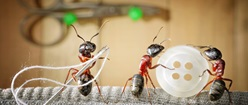 Working ants