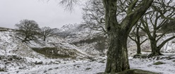 Dovestones in the Snow