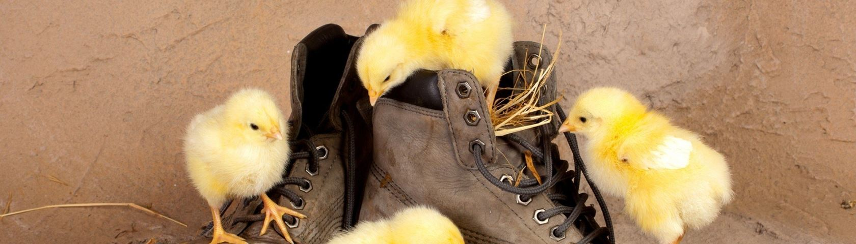 Tiny Chicks