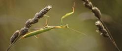 Mantiss Manouvres