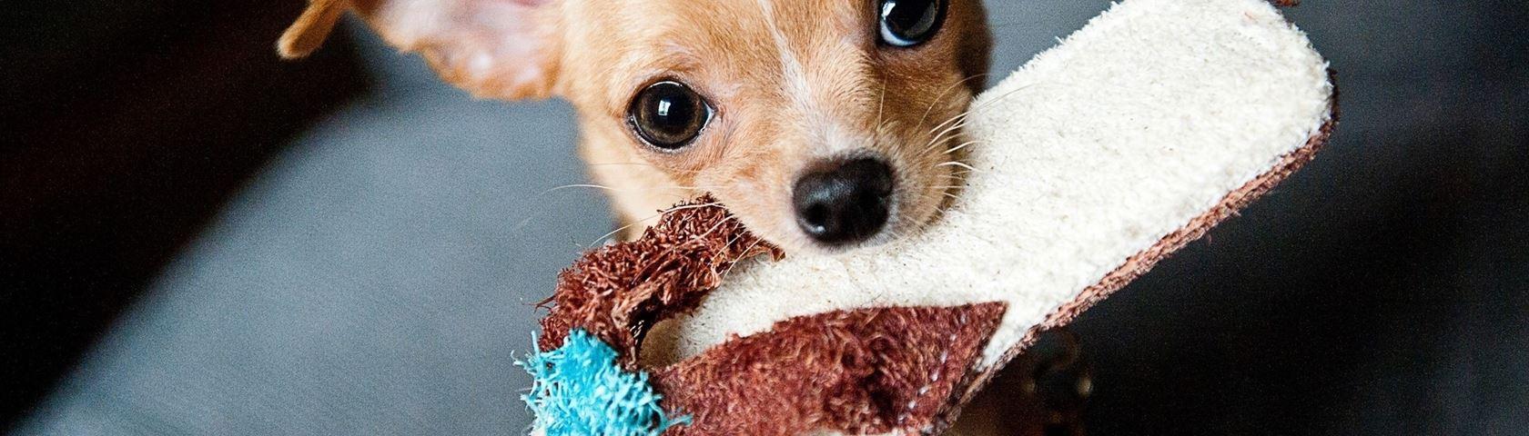 Puppy Prezzie