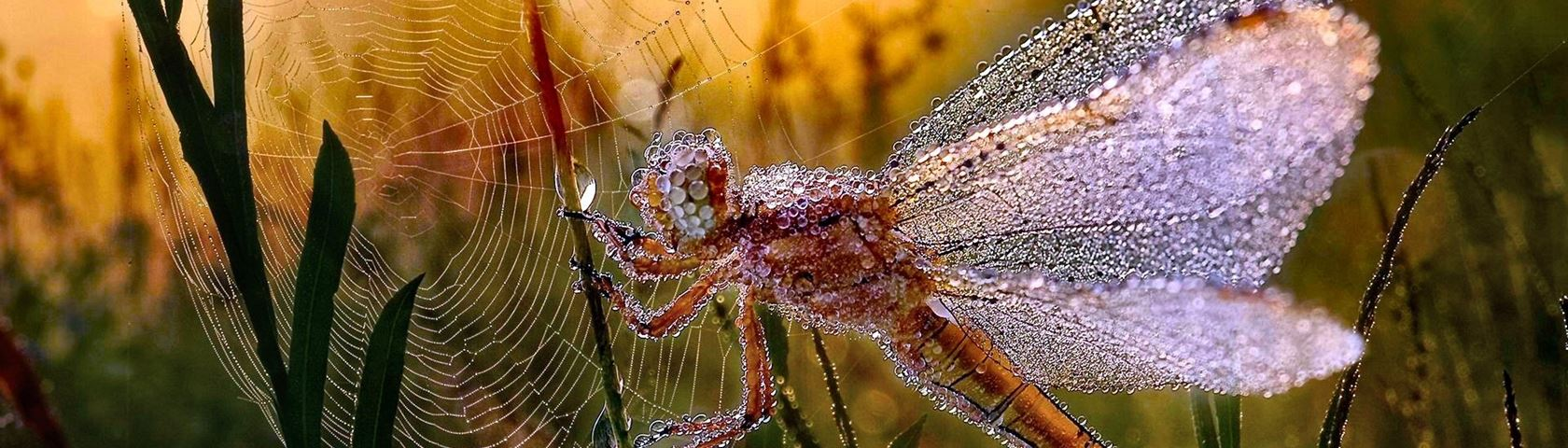 Jewel Encrusted Dragonfly
