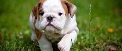 Cutest Puppy