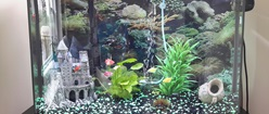 My Freshwater Tank