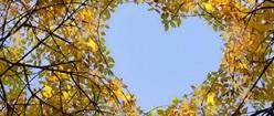 Heart of Birch
