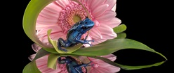 the Froggy and the Flower