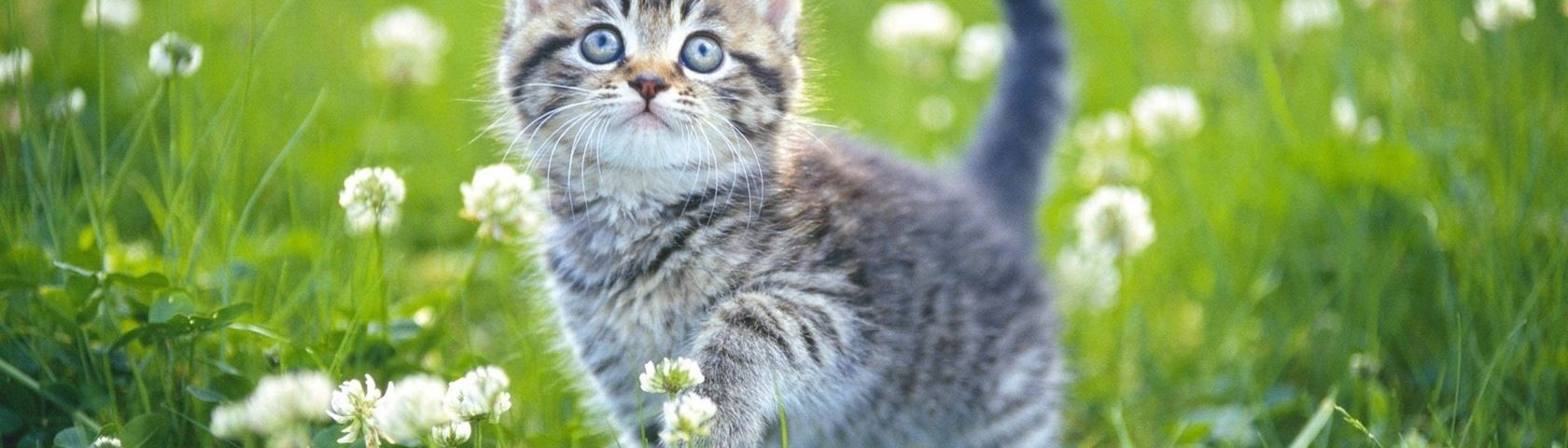 Adventures in Kittyland