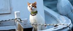 Sailor's Companion