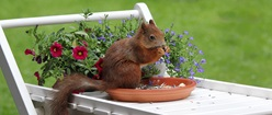 Little Garden Visitor