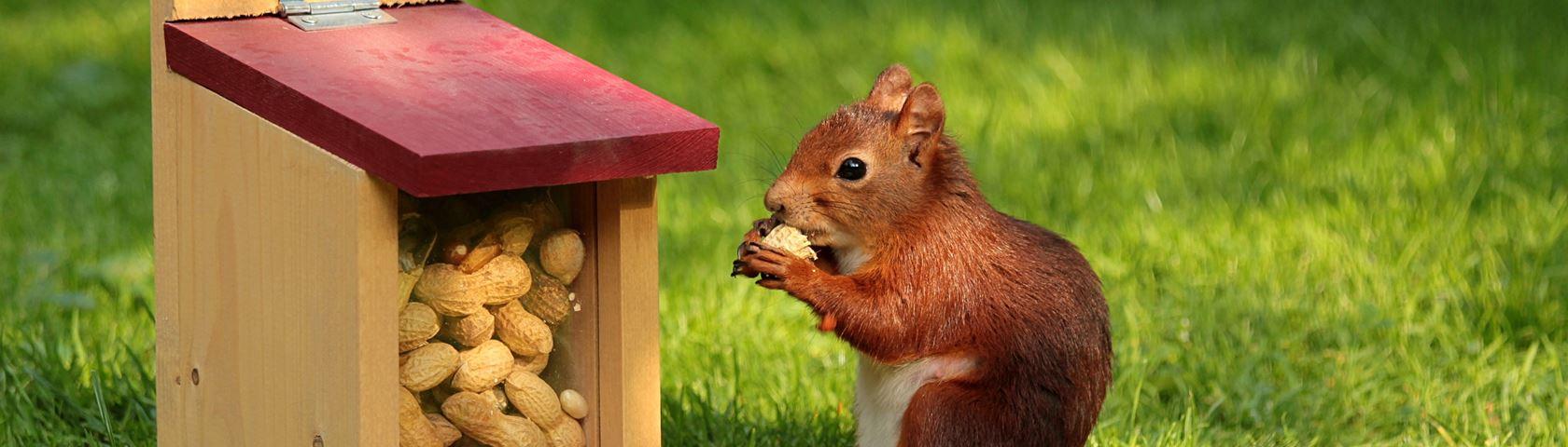 Nutfest