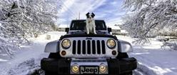 Doggy on a Jeep