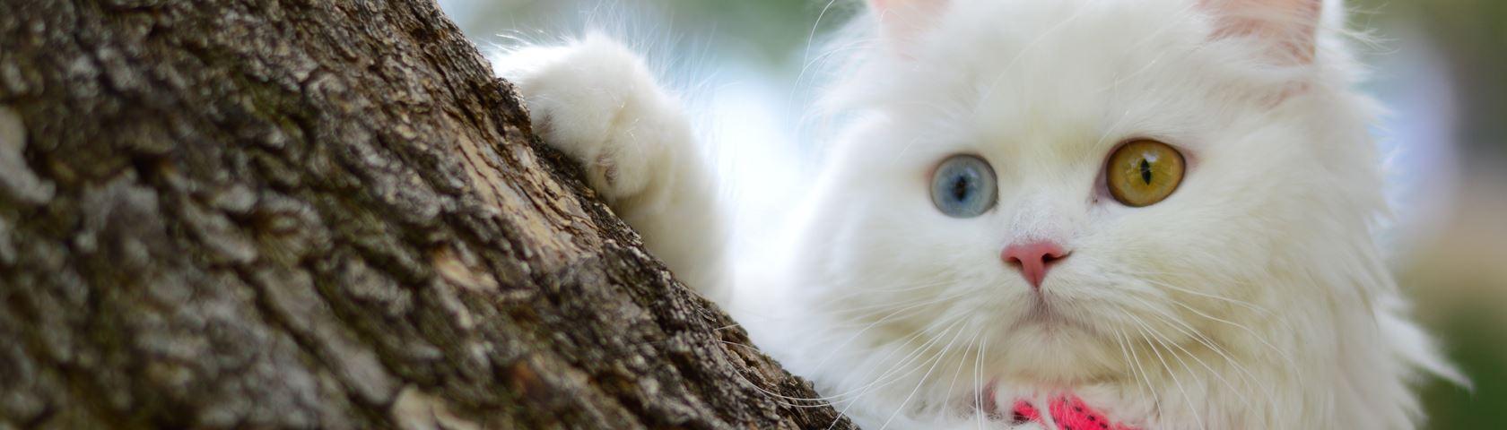 Pretty Kitty