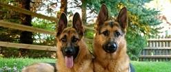 Shepherd Twins