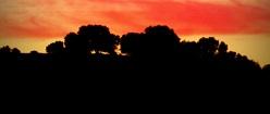 Bella Sunset