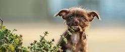 Scruffy Pup