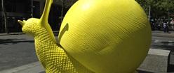 Yellow snail